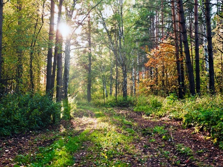 Morning in the autumn forest photo