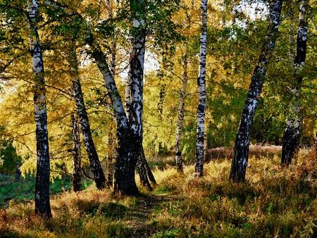 Autumn forest Stock Photo - 10834185