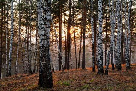 Sunset in the autumn forest Stockfoto