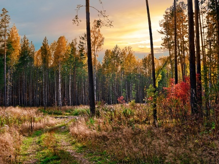 Evening in the autumn forest