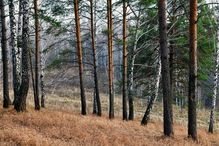 Evening in the autumn forest photo