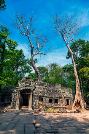 The ruins of Ta Prohm Temple in Cambodia photo