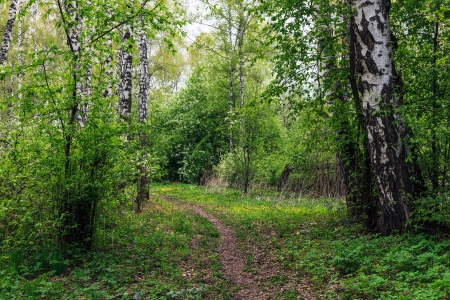 Landscape with a spring forest Stock Photo - 14946266