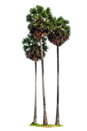 Three palm trees isolated on white background Stockfoto