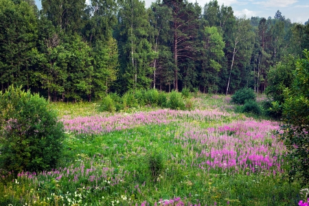 Blooming meadow Stock Photo - 14947193