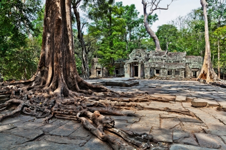 Landscape with giant trees in the temple of Ta Prohm in Cambodia photo