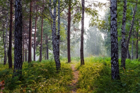 Summer landscape with fog Stock Photo