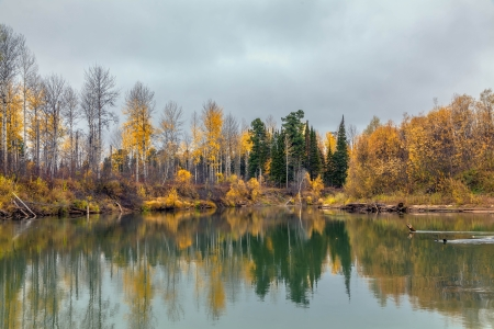 reed: Autumn in Siberia