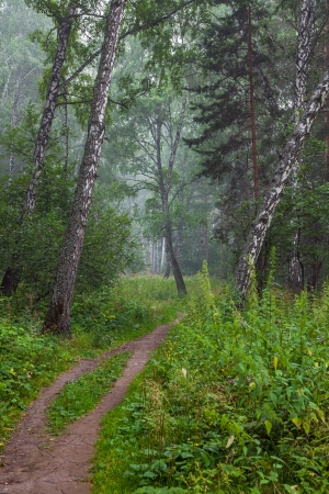 Beautiful summer landscape with forest photo