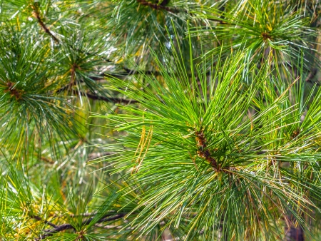 Coniferous vegetation background photo