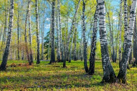 Spring Forest  Stockfoto