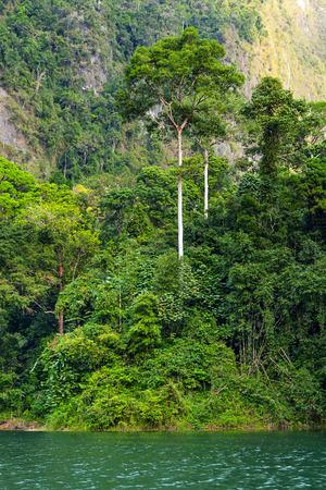 Tropical rainforest lakeside Cheo lan in Thailand photo