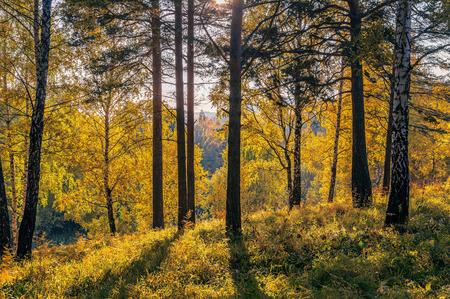 Golden Autumn forest photo