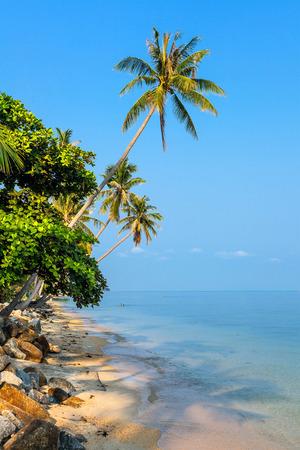 koh samui: Morning on the island of Koh Samui