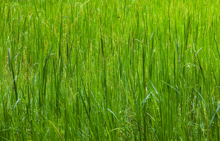 vegetative: Grass. Vegetative background.