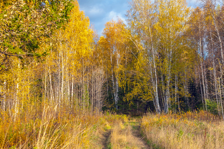 aspen leaf: Autumn landscape Stock Photo