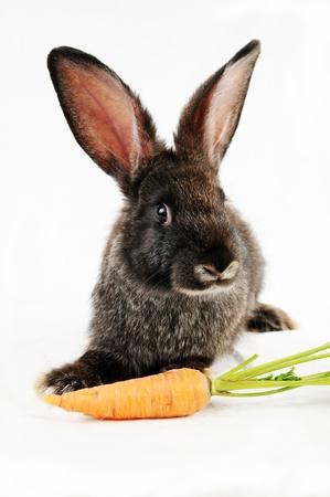 Bunny negra y una zanahoria, aislados en fondo blanco