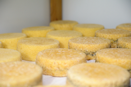 aging: cheese at the dairy, cheese is ripen on wood racks