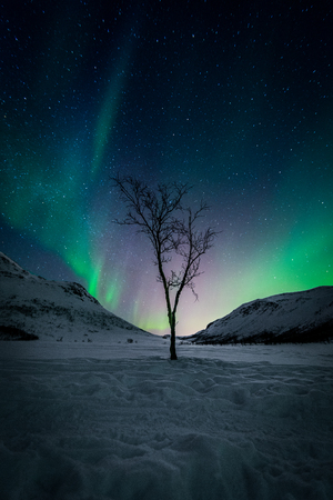 Northern lights  - aurora - in norwegian mountains in winter