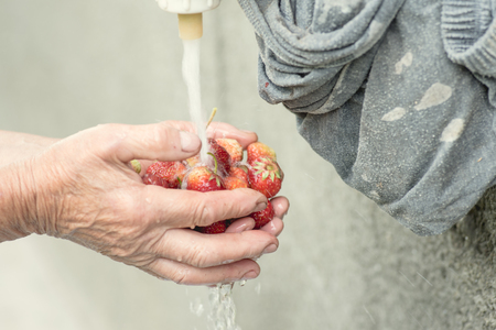 Someone  washing strawberries holding them in both hands Stock Photo