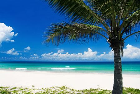 Palm tree on a tropical beach Stock Photo - 2297953