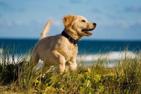 Puppy springen op het strand