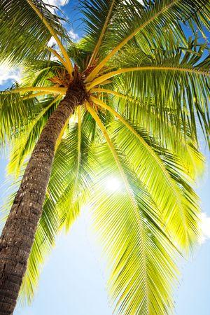 Close up of palm tree agains sunny blue sky photo