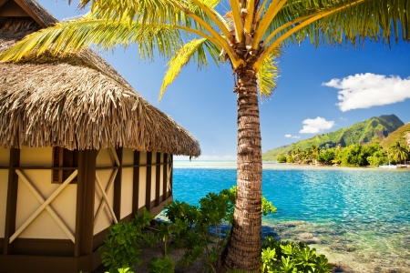 bungalows: Tropical bungalow and palm tree next to amazing blue lagoon Editorial