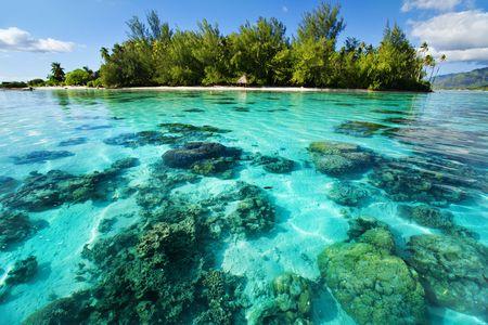 녹색 열대 섬 옆의 수중 산호초