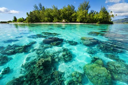 Underwater coral reef next to green tropical island