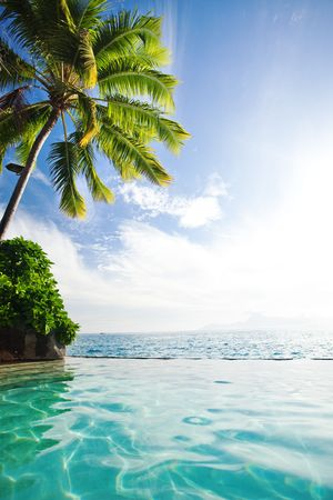 Palm tree hanging over infinity pool and ocean photo