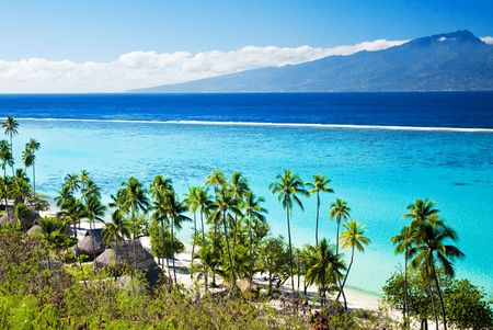 moorea: Palm trees on tropical lagoon beach in tahiti Stock Photo