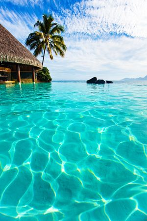 moorea: Palm tree hanging over infinity pool and ocean