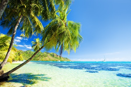 Palm tree hanging over stunning lagoon with blue sky photo