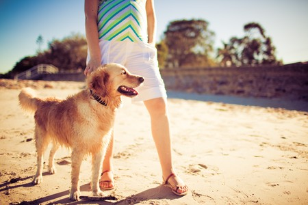 Golden retriever standing by legs of a woman on the beach photo