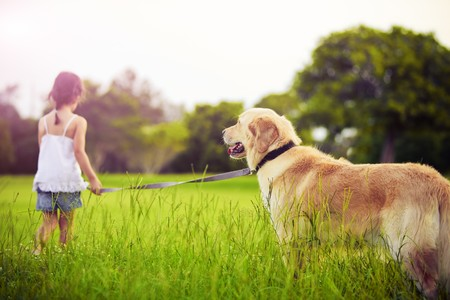 dog park: Young girl with golden retriever walking away into sun Stock Photo