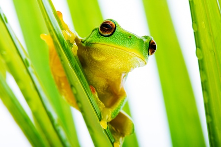Small green tree frog holding on to palm tree photo