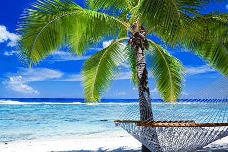 hamaca: Hamaca vacía entre palmeras en playa tropical