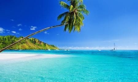 Palm tree hanging over stunning lagoon with blue sky Standard-Bild