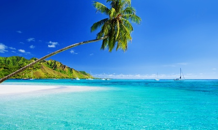 moorea: Palm tree hanging over stunning lagoon with blue sky Stock Photo