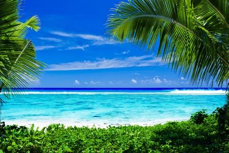 moorea: Deserted tropical beach lagoon framed by palm trees