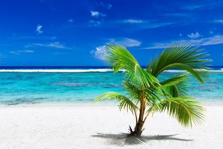Single small palm tree hanging over stunning blue lagoon