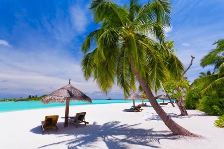 strandstoel: Ligstoelen onder umrellas en palmbomen op een tropisch strand