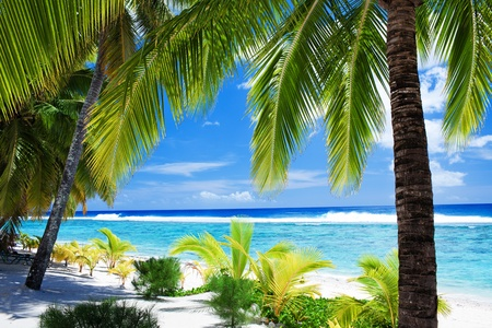 Palm trees overlooking amazing blue lagoon and white beach