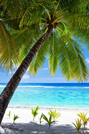 Palm tree overlooking amazing blue lagoon and white beach