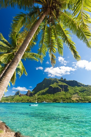 Palm Trees on Shoreline of Ocean at Moorea in Tahiti Stock fotó