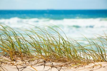 strand australie: Groen gras op zandige duinen met uitzicht op tropisch strand