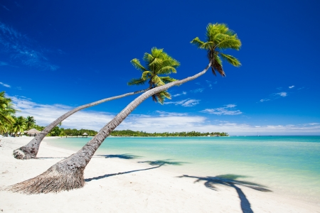 Palm trees hanging over stunning lagoon with blue sky photo
