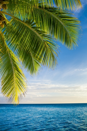 Coconut palm tree leaves over endless ocean with copyspace Standard-Bild