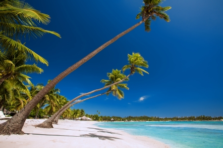 polynesia: Few palm trees over stunning tropical lagoon with white beach